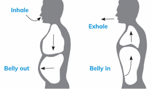 Visual guide to abdominal breathing. Push the belly out during inhalation. Pull the belly in during exhalation.